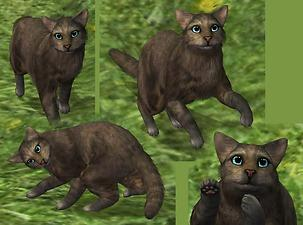 Sims  Warrior Cats Map