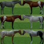 http://thumbs2.modthesims2.com/img/2/5/1/3/3/2/MTS2_thumb_oceanpupz_802537_Horse1.jpg