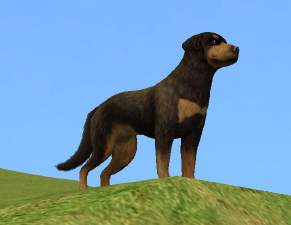 Mod The Sims Downloads Pets Animals