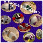http://thumbs2.modthesims2.com/img/4/7/3/5/8/7/MTS2_thumb_FireDemon9_409904_9_hamsters.jpg