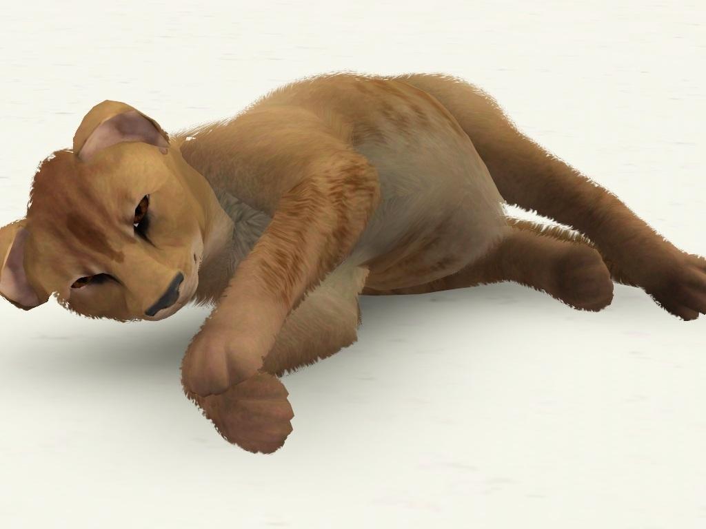 Lion Cub by Bellgirl MTS_Bellgirl-1295686-Screenshot-357